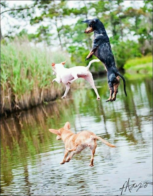 Swimming - dogs fun time