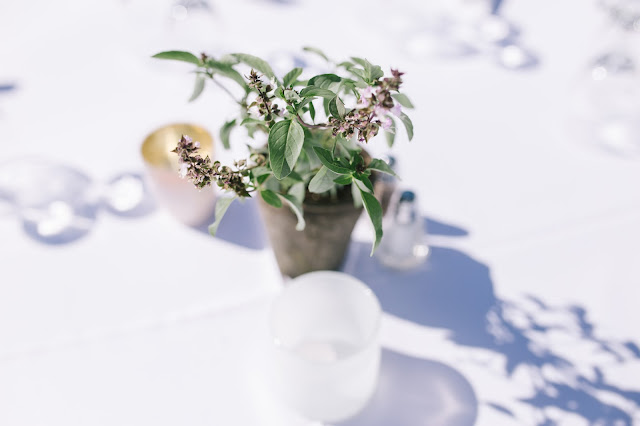 simple centerpiece of flowering basil and rosemary potted in aged terra cotta for a classic garden wedding in utah
