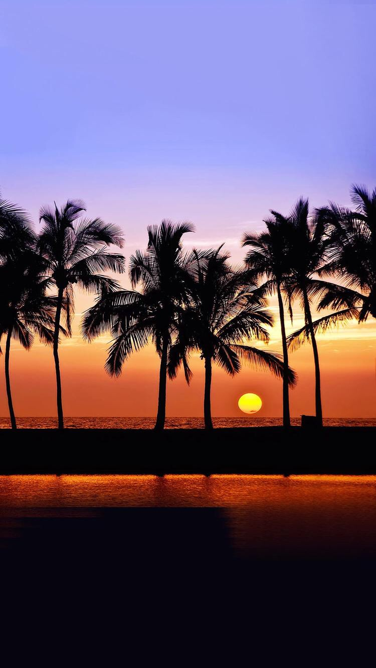 Iphone and android wallpapers palm tree iphone wallpapers - Palm tree wallpaper for android ...