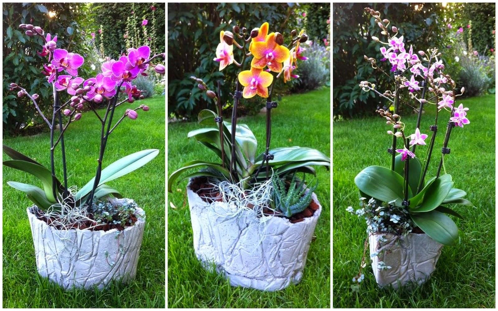 betonplausch zarte orchideen massiver beton. Black Bedroom Furniture Sets. Home Design Ideas