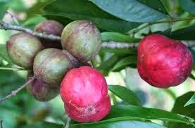 http://www.kabarloka.com/2014/06/manfaat-dan-khasiat-buah-mahkota-dewa.html