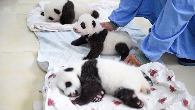 Children panda #6