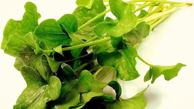 http://buenasiembra.com.ar/salud/alimentacion/index.html