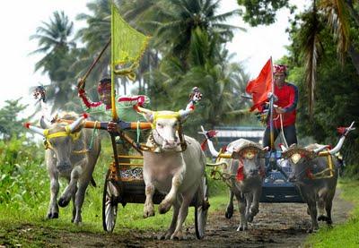 Makepung, Balap Kerbau Masyarakat Bali.