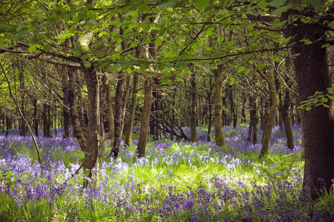Bluebell woodland - by A Handmade Cottage