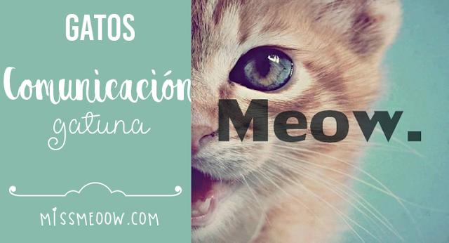 Comunicación gatuna ¡Entérate que te dice tu gatito!
