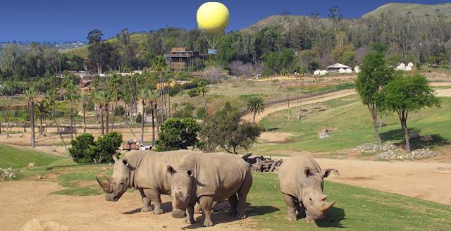 San Diego Zoo Safari Park - CityPass