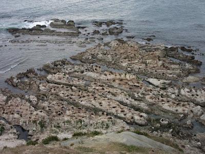 Colonia de lobos marinos en la Península de Kaikoura, en Nueva Zelanda