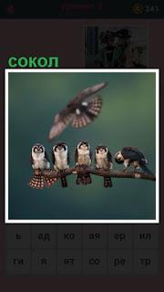 сокол в полете и на ветке сидят несколько птиц