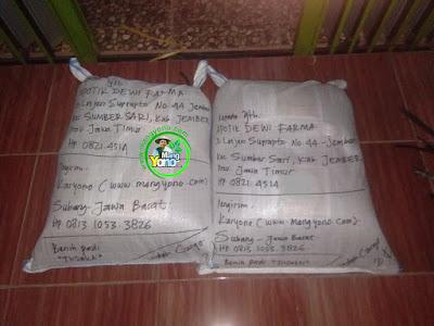 Benih pesanan  APOTIK DEWI FARMA Jember, Jatim  (Setelah Packing)