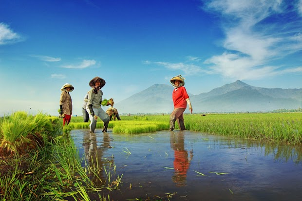 Fakta Pertanian Indonesia Saat Ini