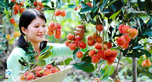 Experiencing Homestay and Visiting Orchards on An Binh Isle