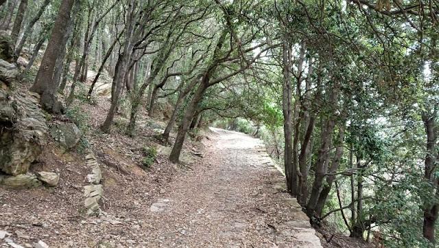 sentiero nel lecceto di montallegro