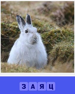 в поле сидит белый пушистый заяц