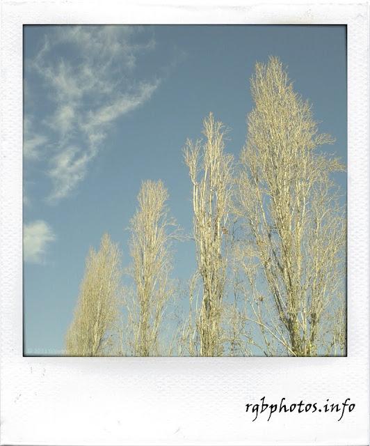Fotografia di alberi senza foglie nel cielo invernale