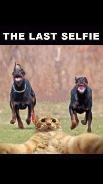 Funny Cat Last Selfie Picture