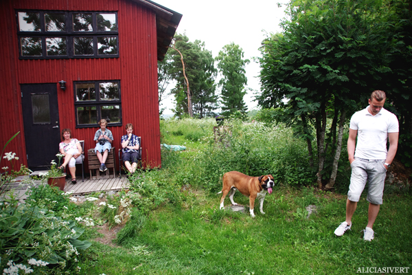 aliciasivert, alicia sivert, alicia sivertsson, midsommar, midsummer, dog, hund, mastiff, boerboel, cash, idyll