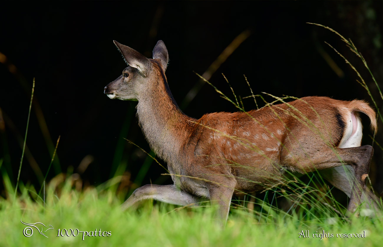 Bambi Joli Nude Photos 89