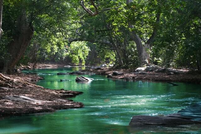 Body of Water Between Green Leaf Trees HD Copyright Free Image