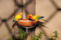 bisnis pakan burung, usaha pakan burung, pakan burung, pakan ternak, makanan burung, usaha makanan burung