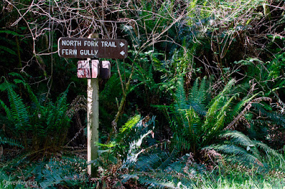 North Fork Trail Junction