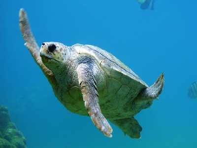 Water Animals Name Turtle