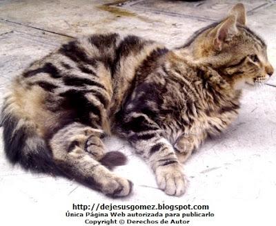 Foto de un gato descansando por Jesus Gómez