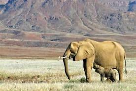 természetfilm A Namíb sivatag nomádjai
