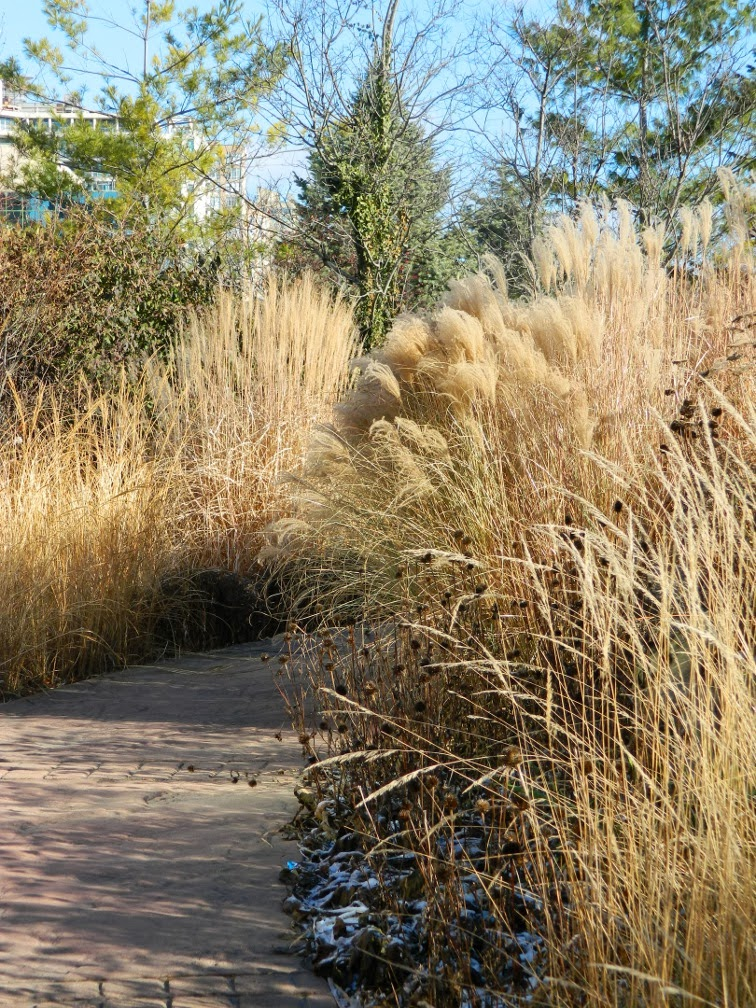 Toronto Music Garden winter ornamental grasses by garden muses-a Toronto gardening blog