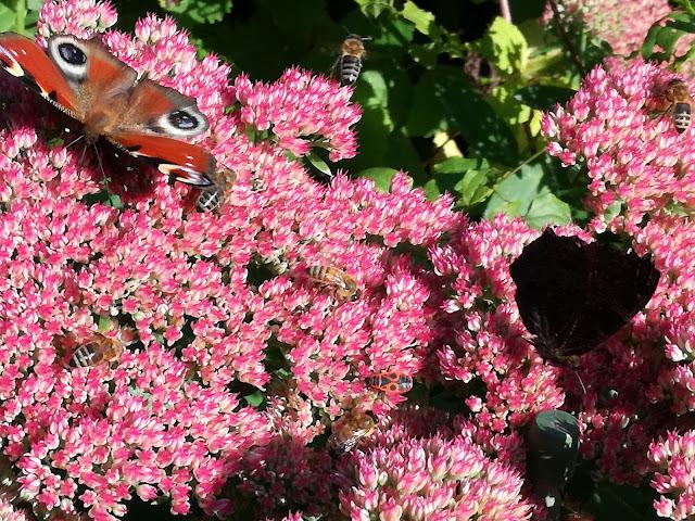 rośliny przyjazne owadom
