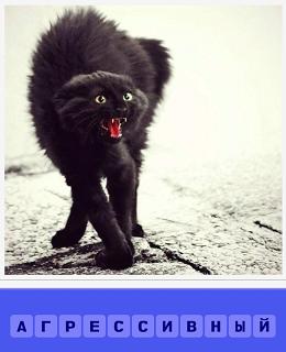 кот выгнув свою спину и открыв рот демонстрирует агрессивность