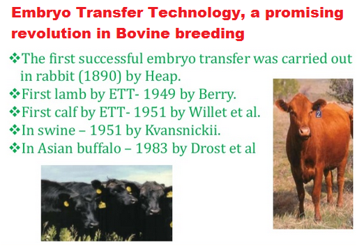 embryo-transfer-technology-promising-revolution-in-bovine-breeding-paramnews