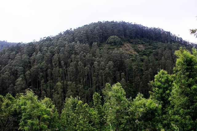 Hills of Manihatty ooty