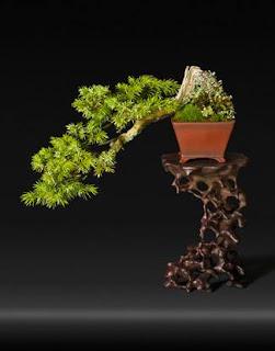 bonsai sebagai sebuah karya seni