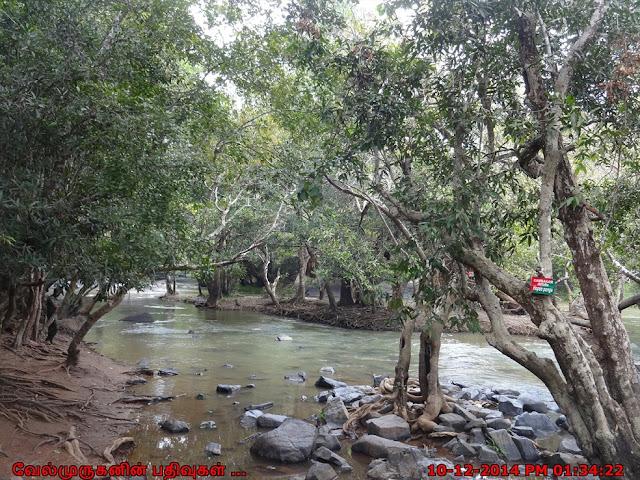 Kuruva Reserve Forest Kerala
