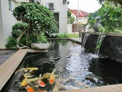Desain Kolam Ikan Minimalis Terbaik, desain kolam ikan minimalis di lahan sempit