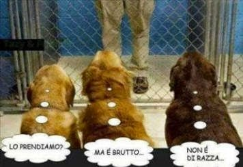 Foto Animali Divertenti Gratis