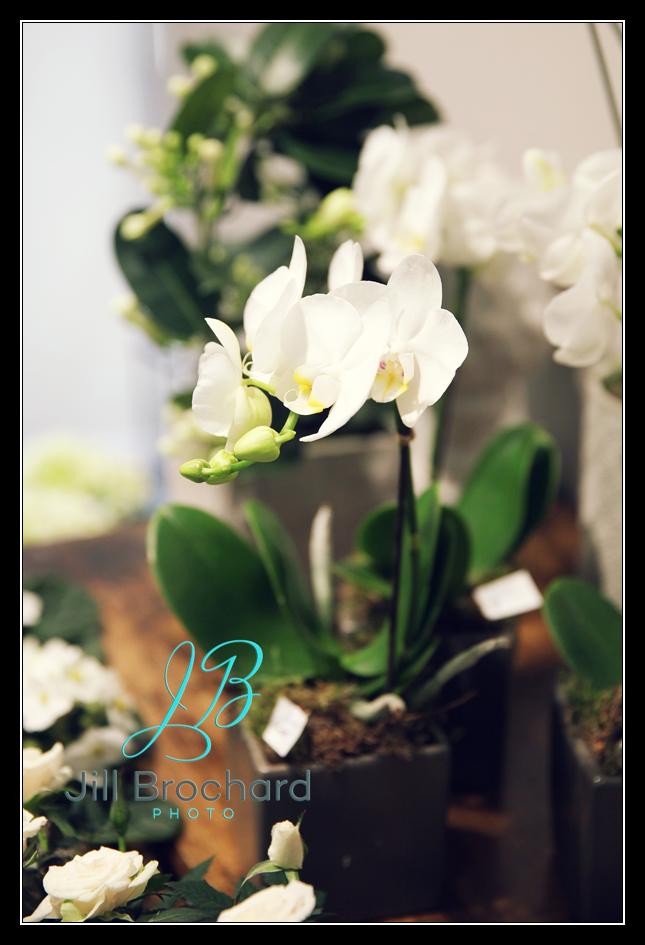 jill brochard photo o p tales de fleurs photographe vend e photographe les herbiers. Black Bedroom Furniture Sets. Home Design Ideas
