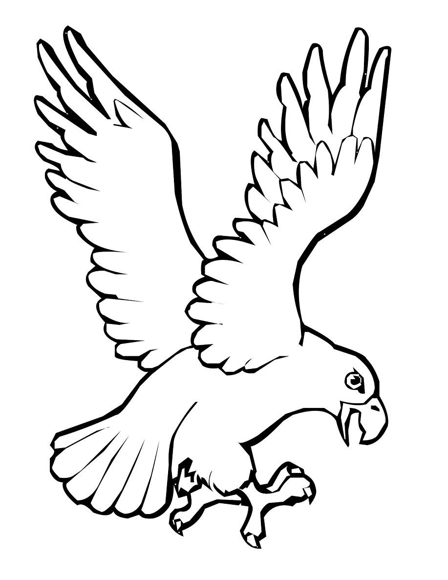 Kumpulan Gambar Sketsa Kepala Burung