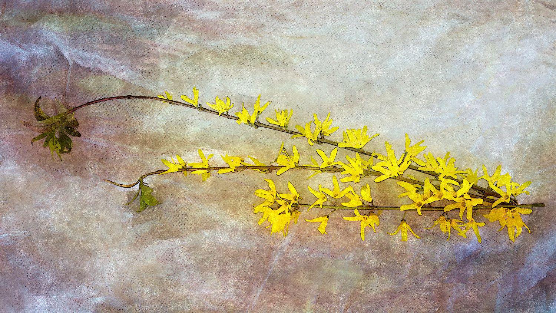 Poesia / Percezioni (Magia giallo cromo).