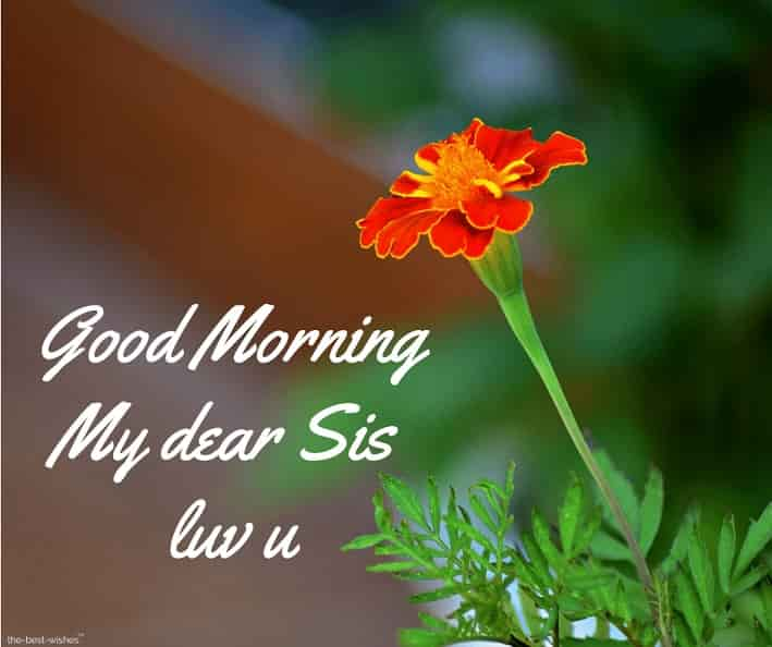 good morning my dear sis luv u