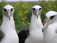Albatross Bird Animal Pictures