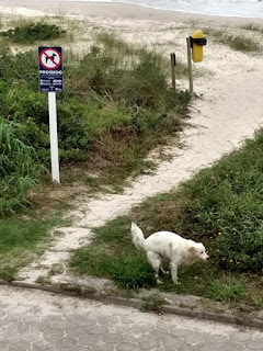 perro prohibido en la playa de brasil