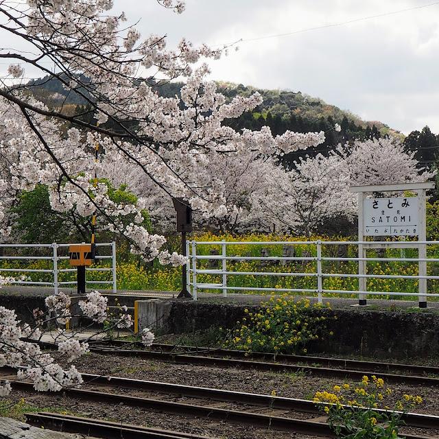 小湊鐵道 里見駅 桜