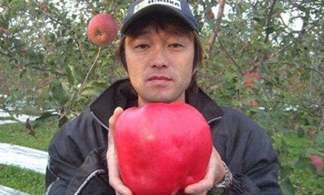 Buah apel terbesar di dunia