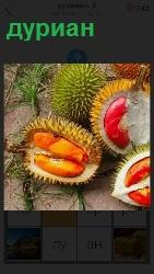лежат несколько фруктов дуриан в разрезе