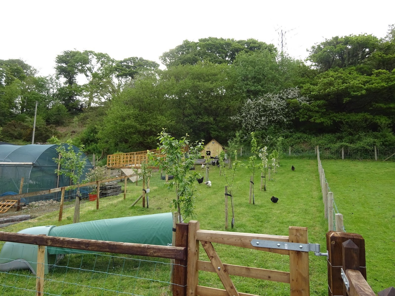 our new life in the country the orchard self sufficient in
