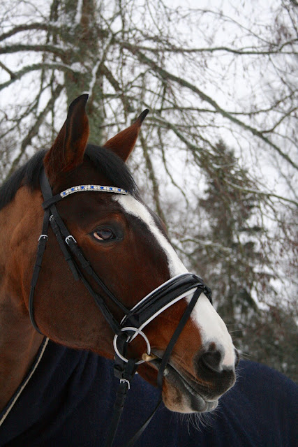 Dressage training: Just think more rationally