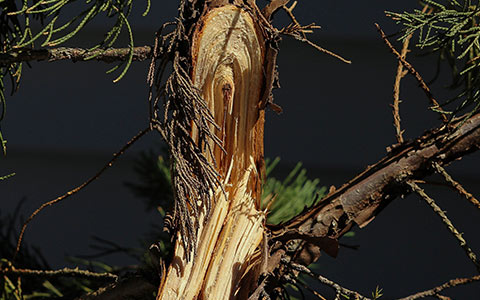 Cut down a storm damaged tree on my property