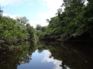 Refúgio de Vida Silvestre Metrópole da Amazônia